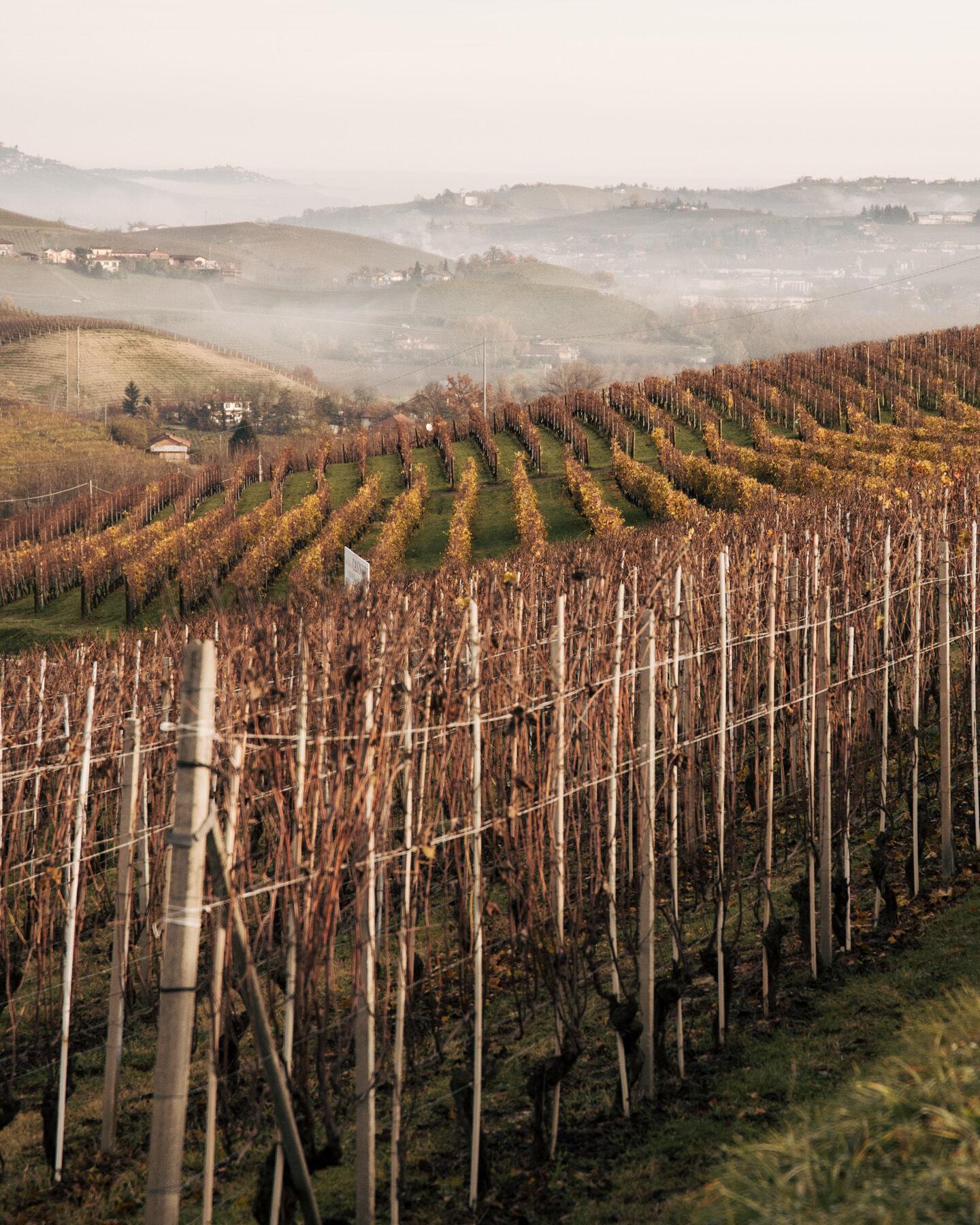 borgogno-piemonte-66