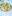 Kiwi Isglass