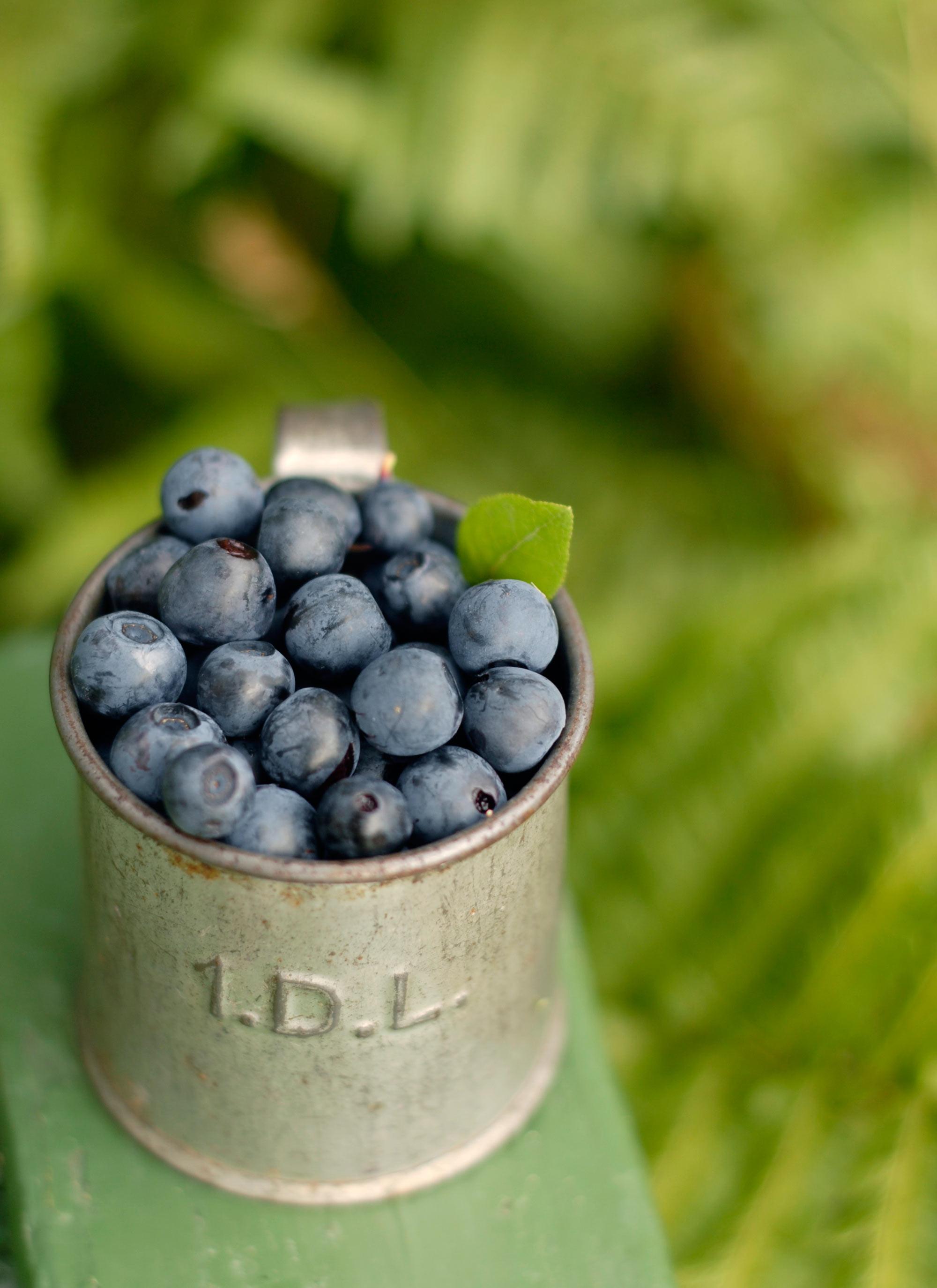 Blueberry-3