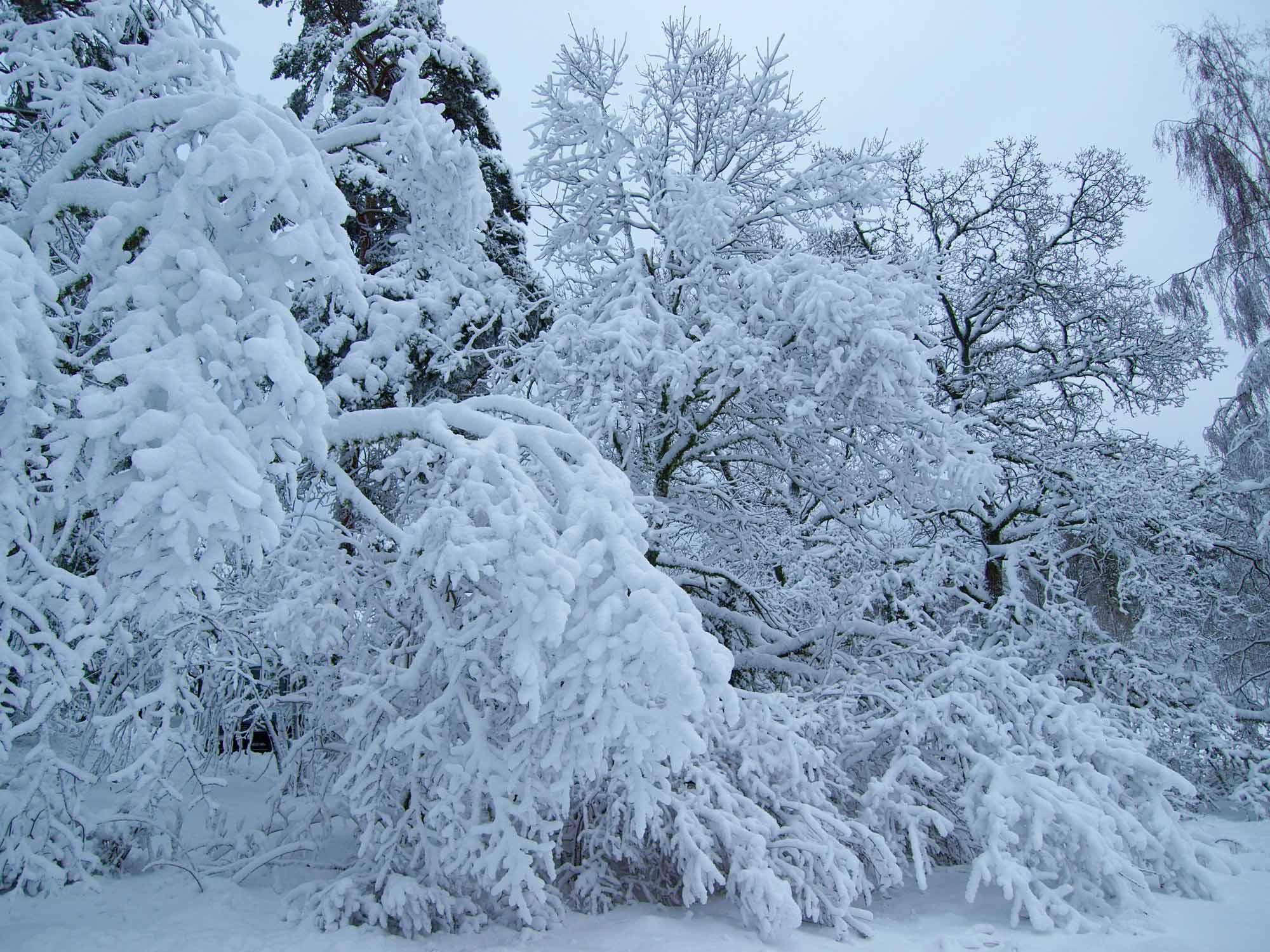 Efter ca 40 cm snöfall blev det så här vackert.