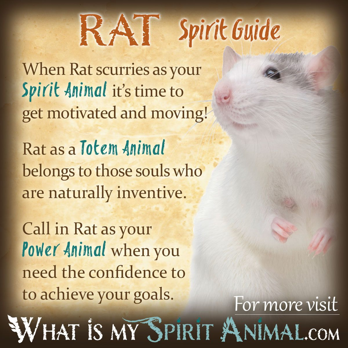 Rat-Spirit-Totem-Power-Animal-Symbolism-Meaning-1200x1200