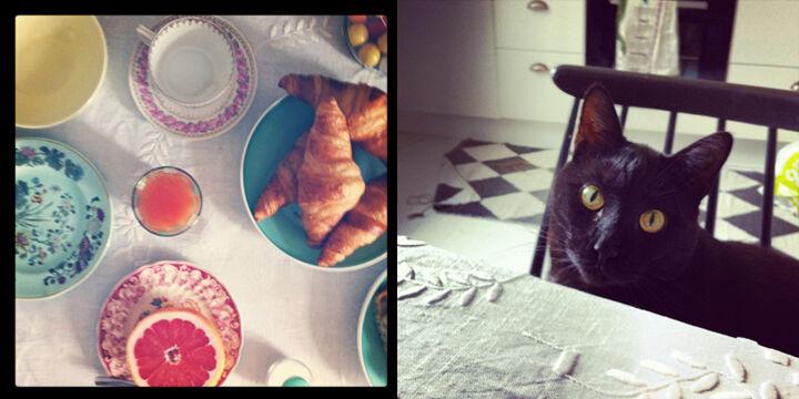 emmas vintage katt frukost