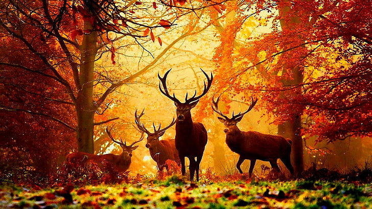 deer-autumn-deers-misty-wallpaper-preview