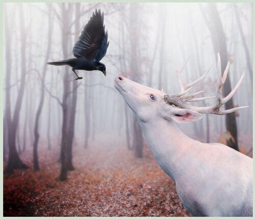 Vita deer med svart fågel