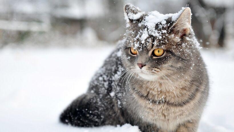 cute-cat-in-snow-2560x1440-1030x579