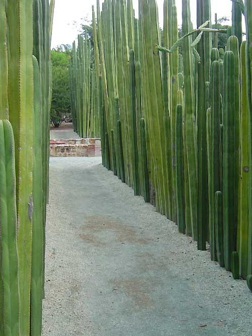 Oaxaca-Botanical-Garden-x