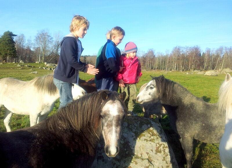 Dagens modellfotograf Elisabeth Rudbeck bor på Salsta i Stora Sundby och hon föder upp de sötaste tänkbara Welsh mountagne ponnysar som kammar hem en massa priser både här hemma och utomlands. I maj kommer Lovisa och jag åka och gulla med hennes föl.