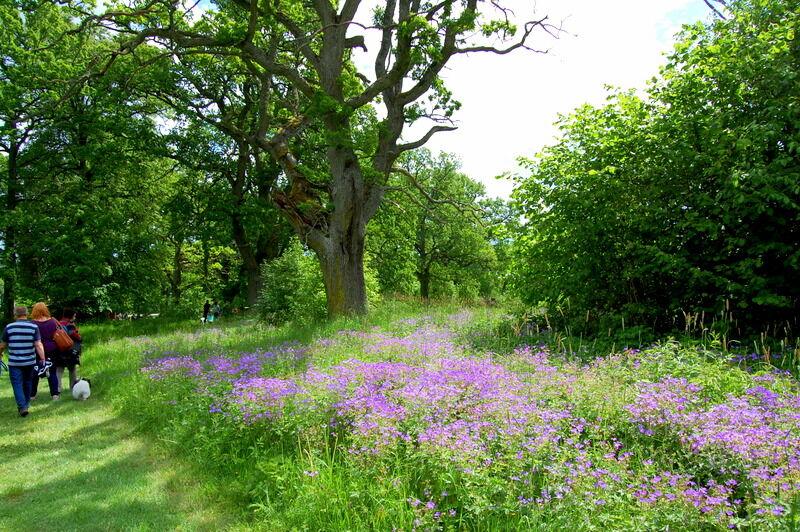 Parken runt Strömsholm är lummig med mängder av gamla ekar och vilda blommor.