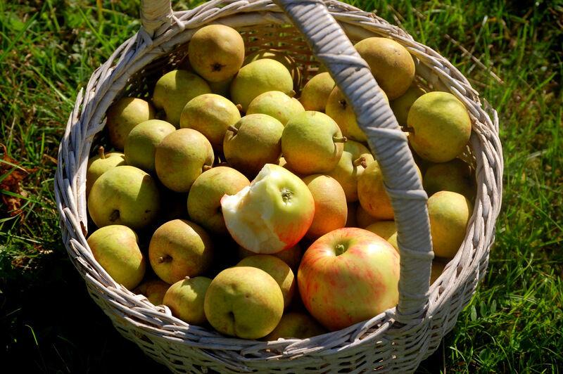 Hemma hos mig går sällan en dag utan att juicemaskinen åker fram och det är perfekt nu när det är bara att gå ut och hämta frukten i trädgården! De gamla päronträden är  dock så höga att det skulle behövas en mindre skylift för att plocka direkt från trädet så jag får nöja mig med fallfrukt, vilket går alldeles utmärkt.
