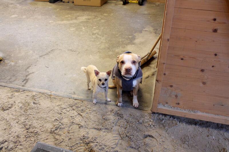 Hit men inte längre! Två sötnosar satt snällt och tittade på med tassarna precis så långt fram som de fick vara.