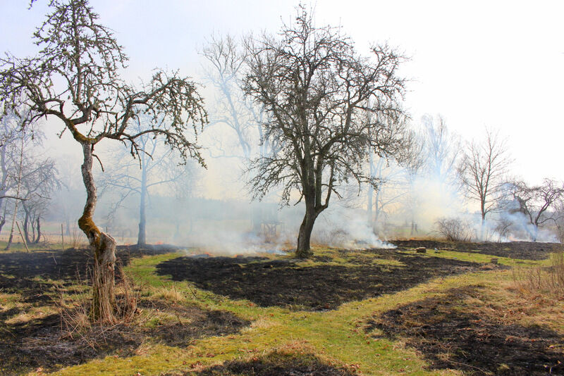 Det blåste ganska kraftigt och ibland brann det så intensivt att jag funderade på att bli orolig. Men vinden var väldigt sammarbetsvillig och jag hade också hjälp av de klippta gångarna som avgränsade eldens framfart.