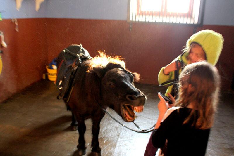 I veckan körde vi tillbaka lille Jeltsin som vi lånat från ridskolan. Regnet föll mot rutan och tempraturen visade 15 grader.  När vi körde tillbaka ponnyn samma tid förra året pendlade temperaturen mellan 39 och 40 grader. Vilken otrolig skillnad!
