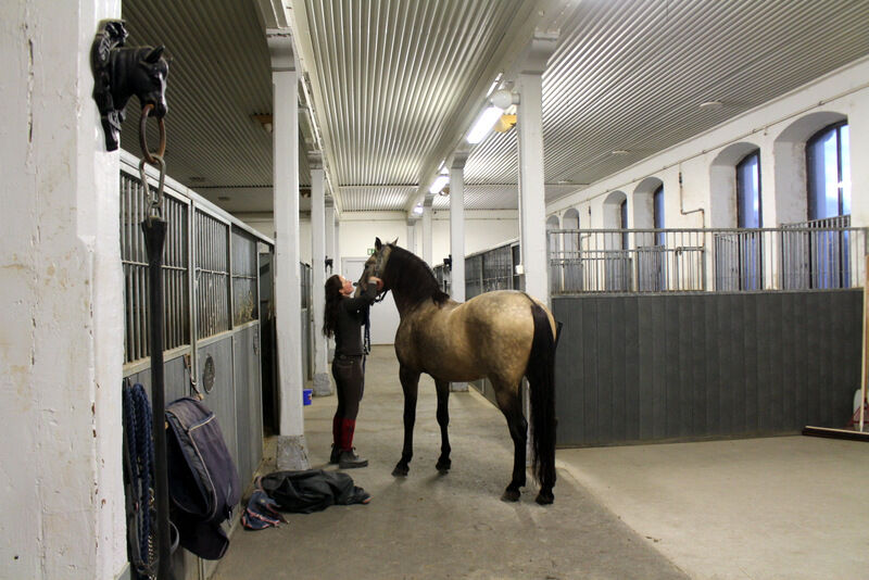 Nu blev jag väldigt ridsugen. Vilka fina hästar jag fick se!
