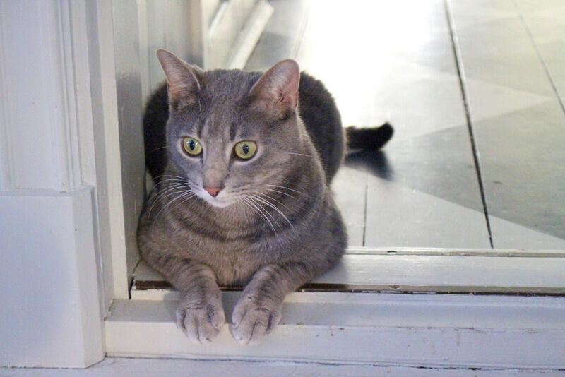 Inte ens Smirre, som nästan är ett vilt djur, vill vara utomhus. Han har nu drabbats av någon form av kattångest av allt stugsittande och springer stundtals runt i alla rummen som om han vore jagad.