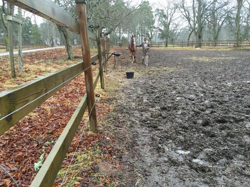 Jag trotsade vädret och begav mig till stallet efter frukost. Så här lerigt är det i rasthagen just nu, och givetvis står hästarna i andra änden av hagen och väntar på att bli hämtade. Så retsamt!