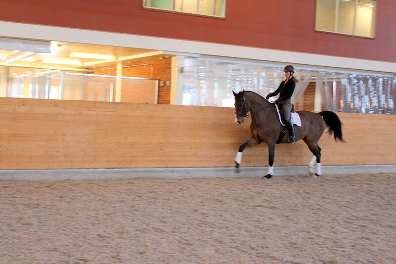 Här är jag och tjusiga Pampas för ca ett år sedan. En maffig häst med gigantiska gångarter (det gick åt många kalorier att rida honom). För er som undrar var Pampas tog vägen så kan jag berätta att Therese beslöt att sälja honom. Han var redo för att ge sig ut på tävlingsbanan och varken jag eller Therese kände att vi hade tiden som krävdes för det.