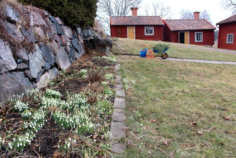 Elsa åkte tillbaka till sitt jobb i Stockholm. jag gick till gymmet och fick sedan en hel del vårstädning gjort i trädgården.