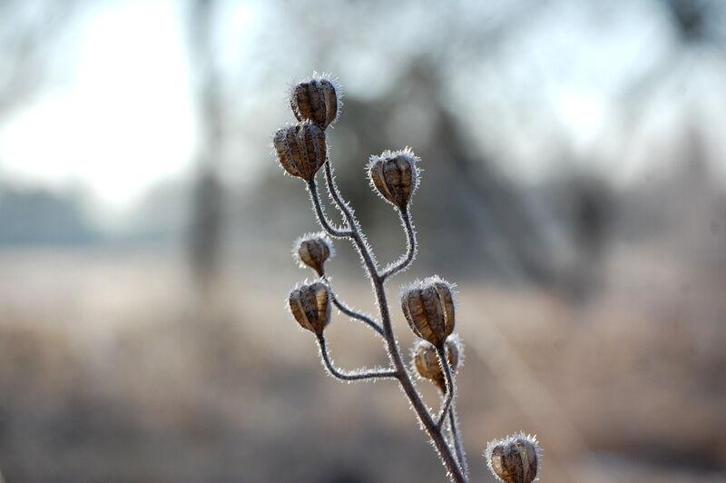 Ännu är det frost på mornarna, men inte så länge till.