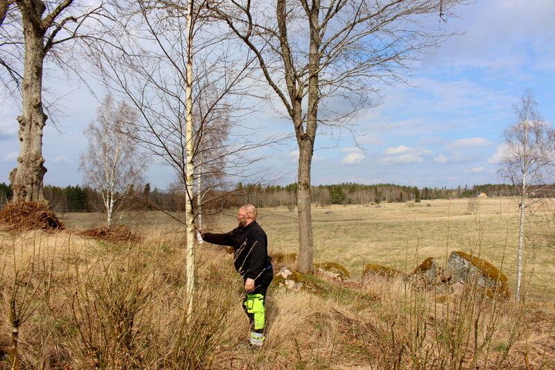 och så har jag gått runt och märkt ut träd som ska fällas.