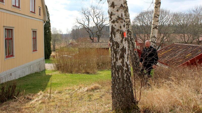 Egentligen är det den stora almen som syns i bakgrunden som dött och behöver fällas. Passar på att t ta ett antal andra träd på en gång. Björkarna står lite väl nära huset och hör inte hemma i parkmiljö, så det åker bort. Det känns lite hårt.