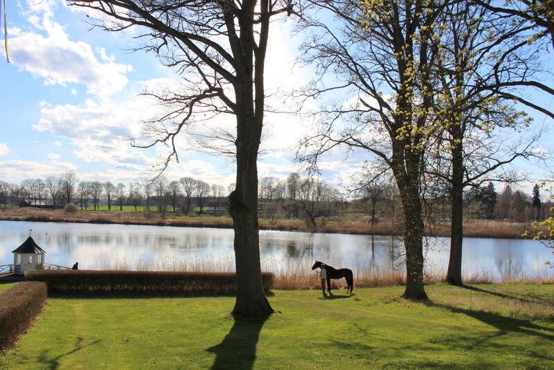 Eftersom Segersjö arrangerar en årlig  internationell fältävlan på gården så  måste det förstås vara med en häst på någon av bilderna.