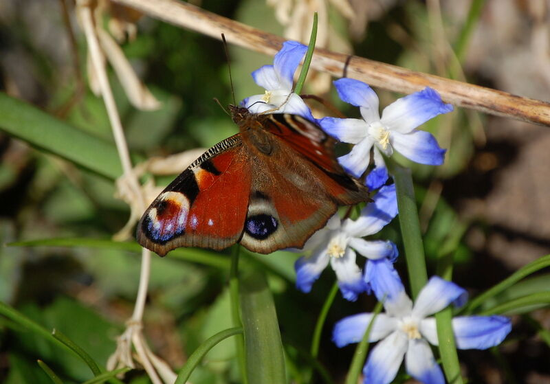 Fjärilar och blommor - klart man blir på strålande humör!