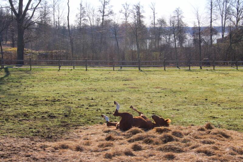 Lille Xet njuter i solen och rullar sig i maten.