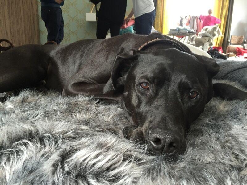 Den här hunden har haft turen att göra en sagolik klassresa. Han har räddats från gatan i Spanien.