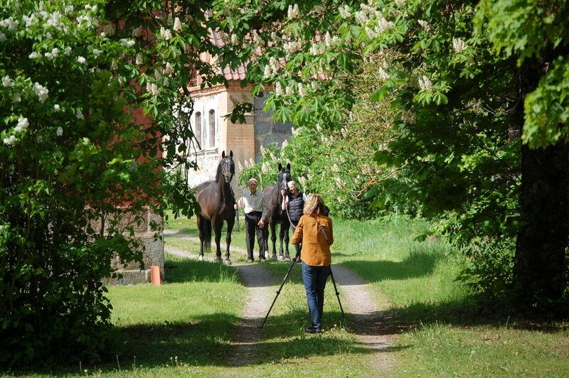 Såklart vi ville se hästarna.