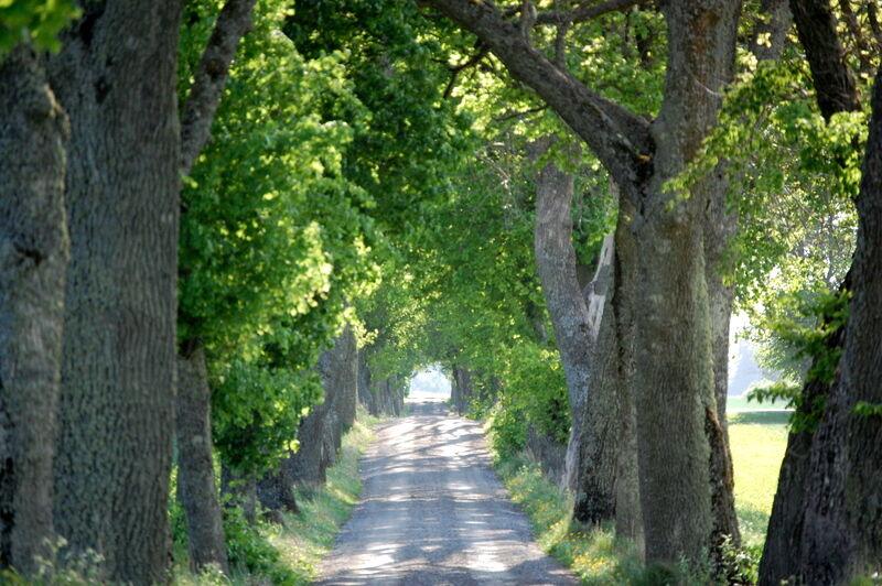 En allé på ca 2,5 km leder till Fiholm