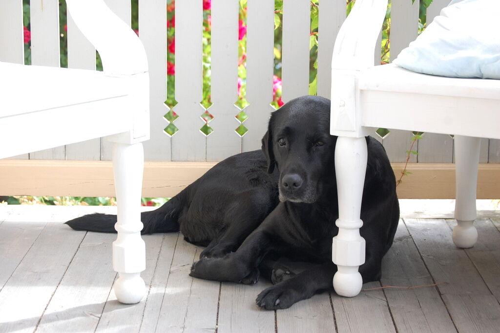 Tosie är inte ledsen utan bara trött efter att lekt massor med bästa vänner.