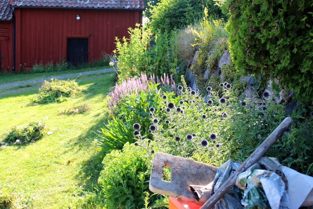 Ena sidan rensad och klar. Ogräsrensning i blandat sol och regn är perfekt. Det går mycket lättare att få upp rötter när det är fuktigt.