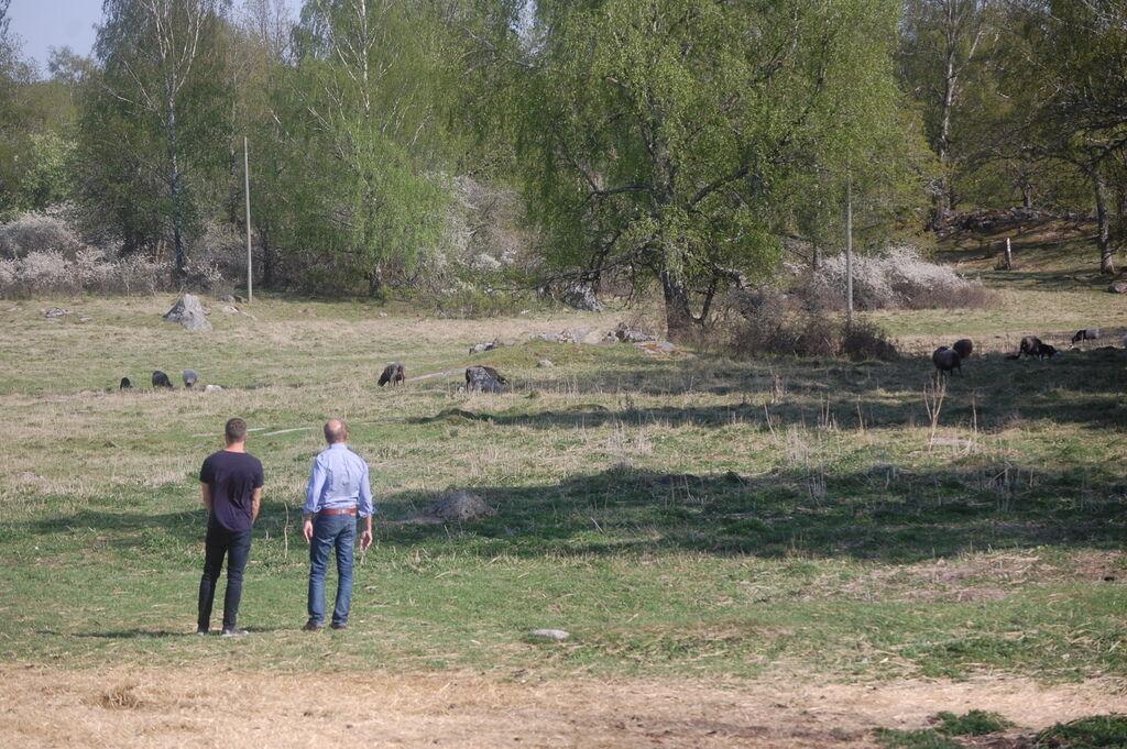 När vi kände oss nöjda med bilderna tog Sven med oss på en runda på ägorna.