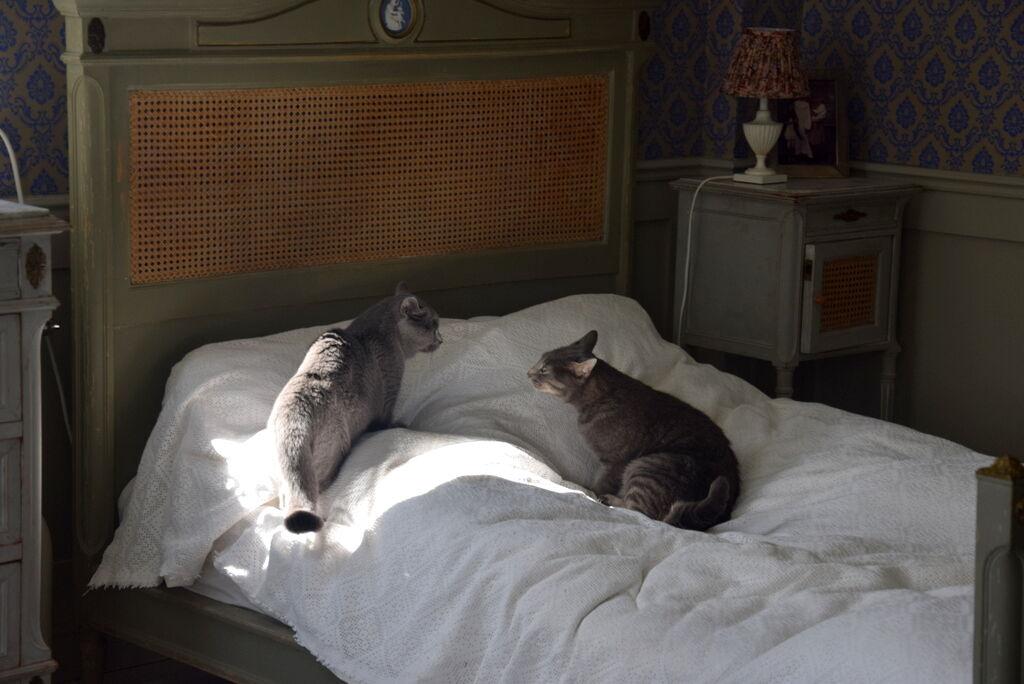 Han kan tillslut inte låta bli att gå fram, men efter en sträng blick från Smirre smög han försiktigt ner från sängen igen.