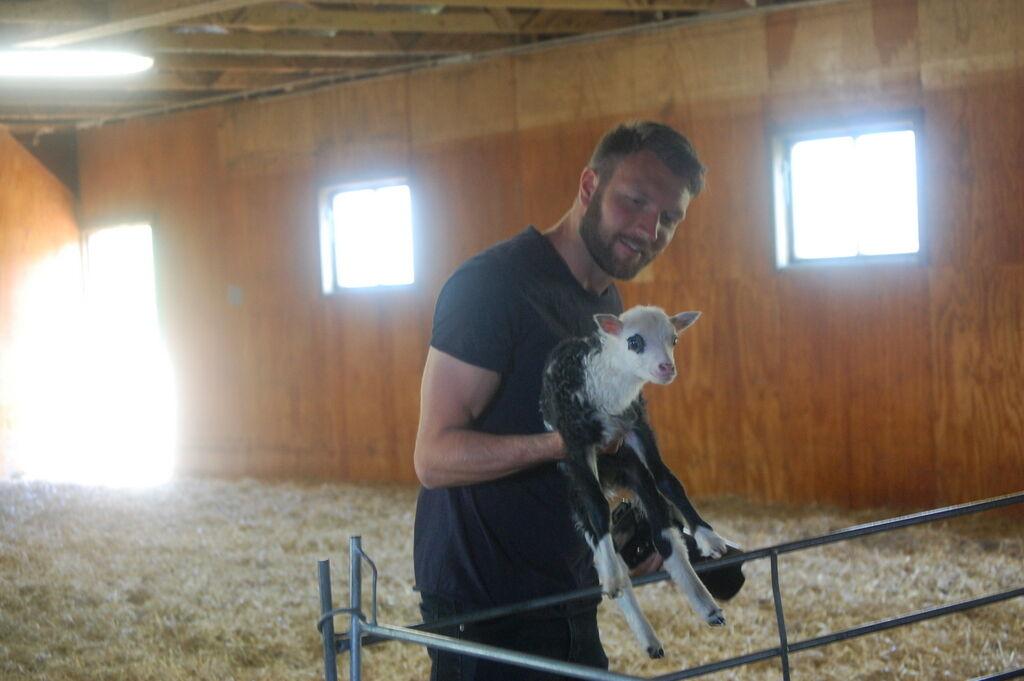 Klas hälsar på gulligt litet lamm.