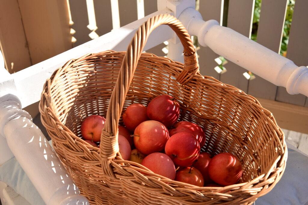 Nyplockad frukt till juicemaskinen och kvällens äppelpaj.