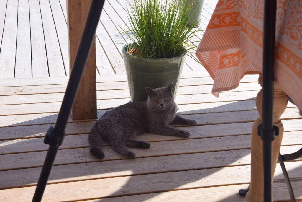 Boris från St Tropez följde allt vi gjorde nyfiket, men ville inte själv vara med på bild.