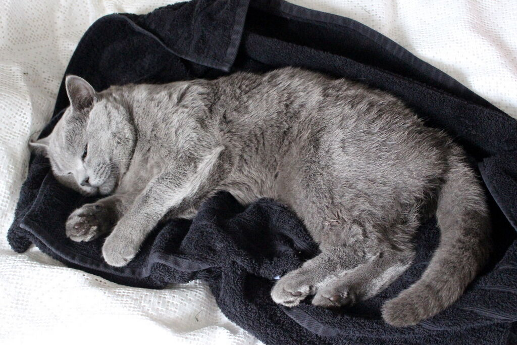 Stackars Boris blev väldigt sömnig att sprutan han fick och vägrade vakna i nästan fyra timmar.
