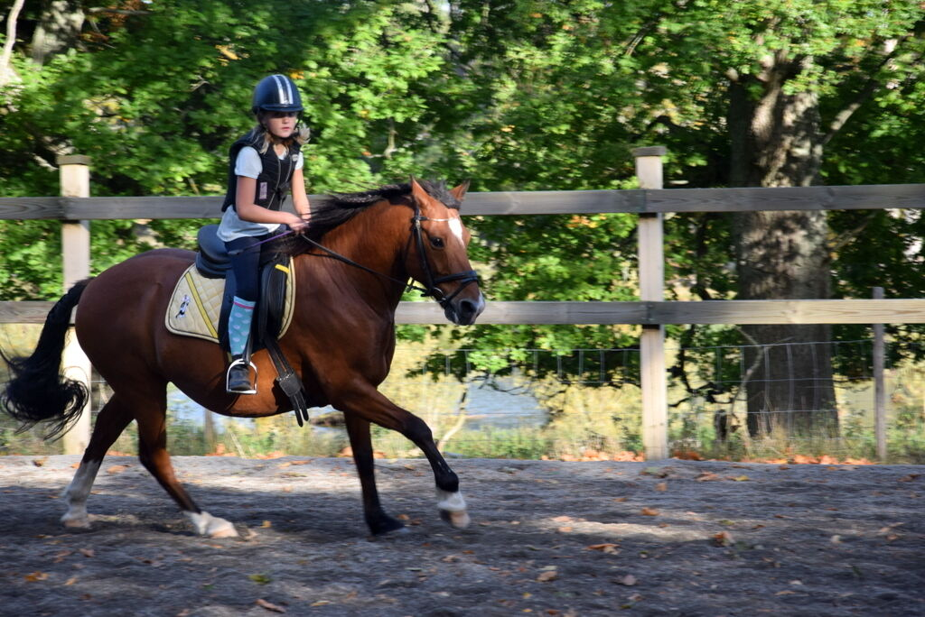 Lovisa lär sig känna sin nya ponny Mackan, som även jag kan hoppa upp på en stund.