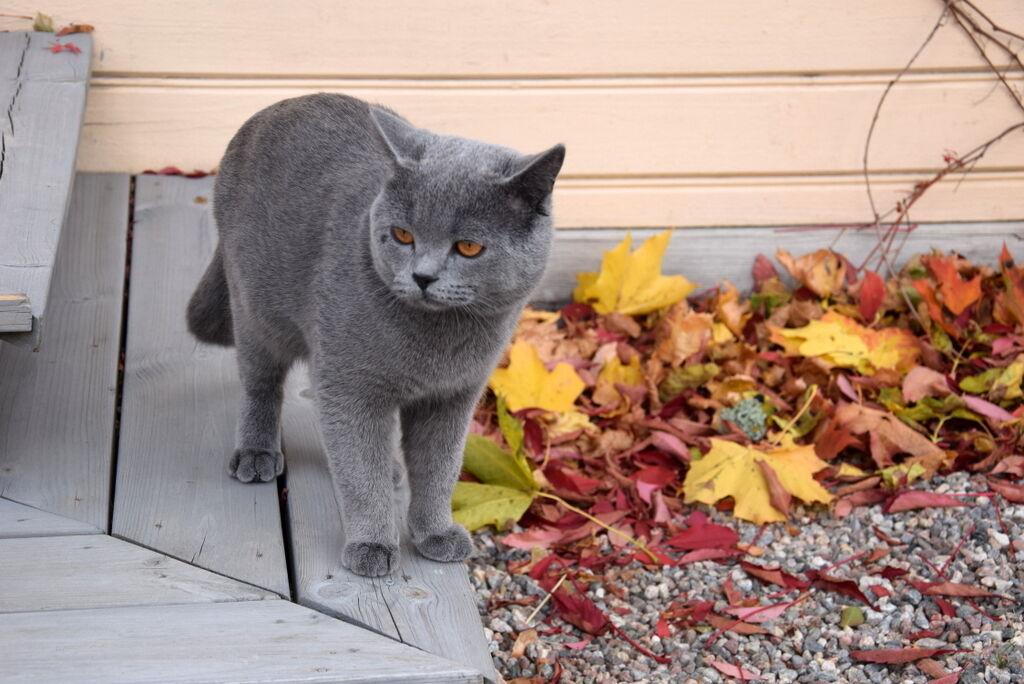 Boris gillar hösten och har börjat ta med sig diverse byten in genom kattluckan.
