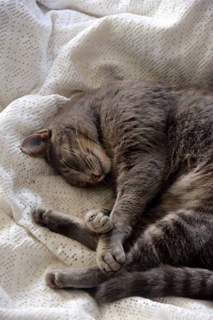 Jägare Smirre sover massor efter en sommar ute på vift. Än är inte stridsyxan nergrävd mellan de två, men tack vare Smirres tålamod går det ändå bra. Bästa kissen!