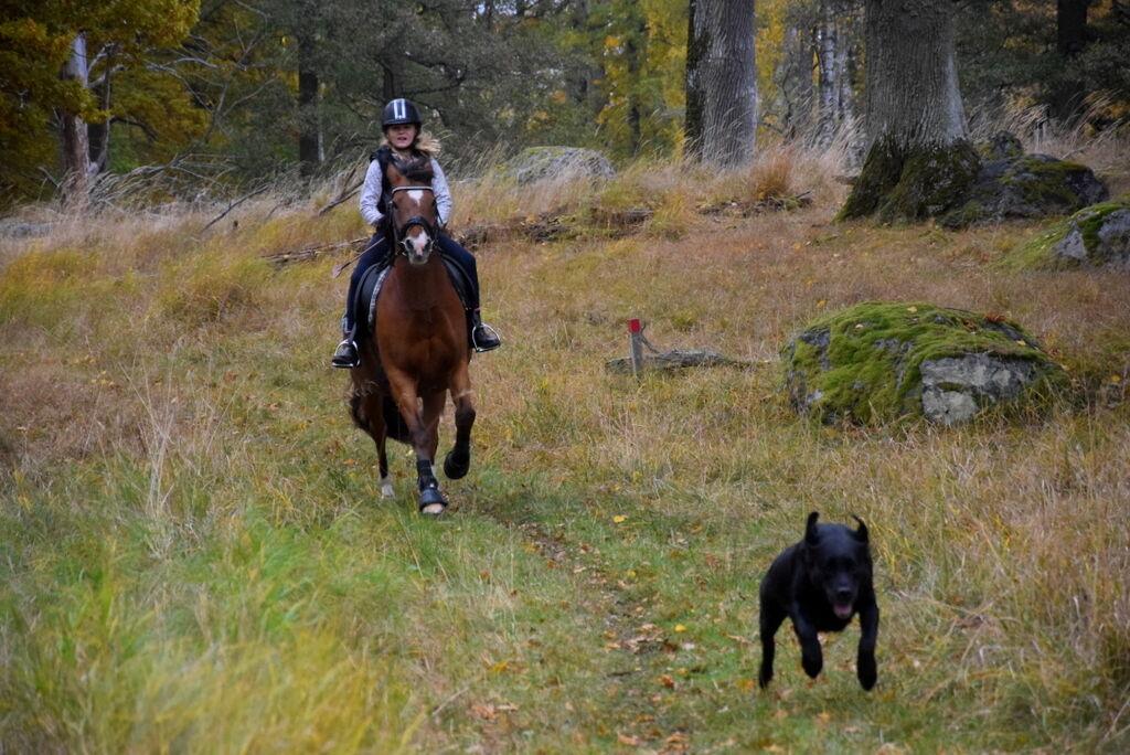 Vem springer snabbast - Tosie eller mackan?