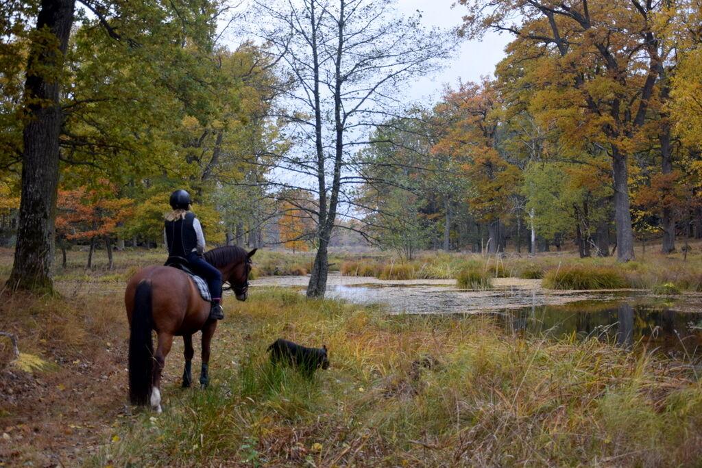 Vi rider förbi dammar och Tosie badar glatt.