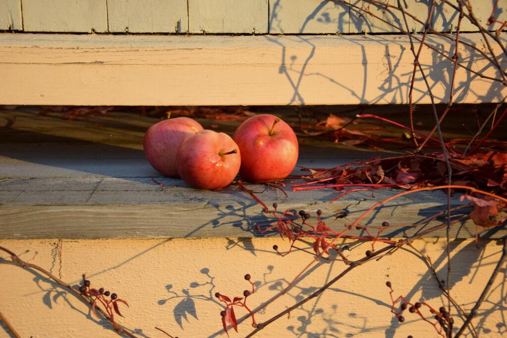 Nyplockade äpplen till morgonens juice.