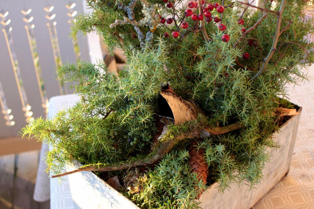 Gjorde min egen lilla miniskog i en gammal plåtlåda.