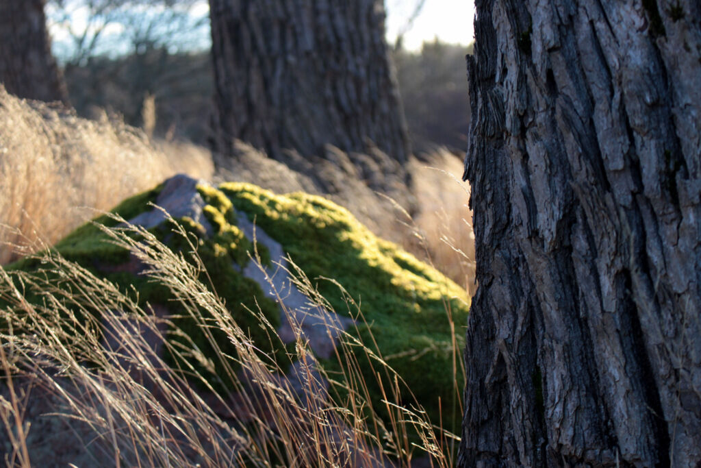 Underbart väder att ge sig ut på kvist, gren och mossjakt.