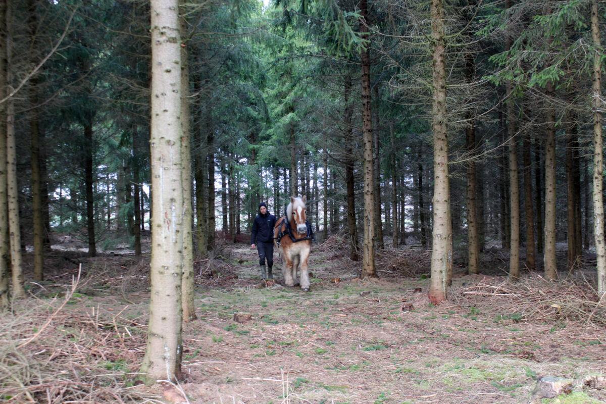 Efter en och en halv timmes resa hittade vi Magnus Bjeremo med sin häst ute i skogen.