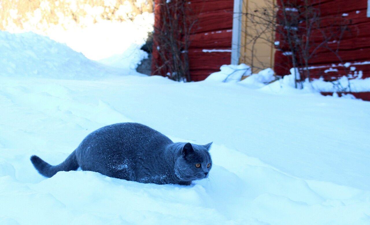 Boris från Saint Tropez räds inte snön.