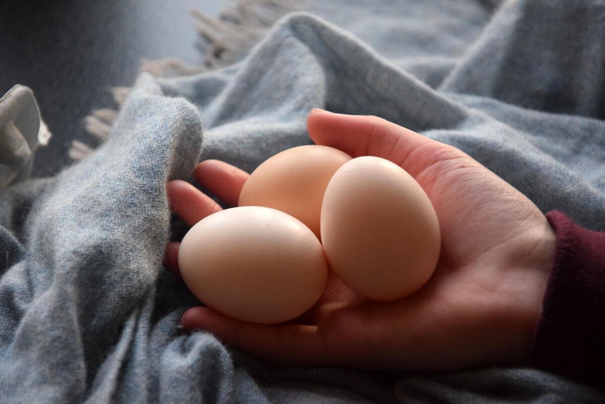 Våra första egna ägg känns som skatter!