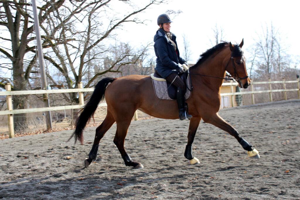 Jag har lyckats smita till stallet också och haft glädjen att träna med vackra Alice. Alltid glad när jag rider.
